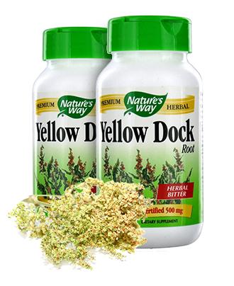 Yellow Dock