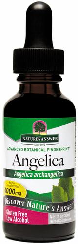 Extrato líquido de raiz de angélica 1 fl oz (30 mL) Frasco conta-gotas